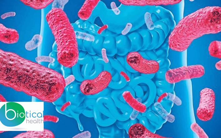 ¿Por qué es bueno tomar probióticos?